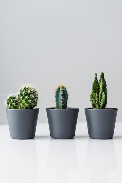 Tre tipi di cactus verdi su uno sfondo grigio. pianta succulenta domestica Foto Premium