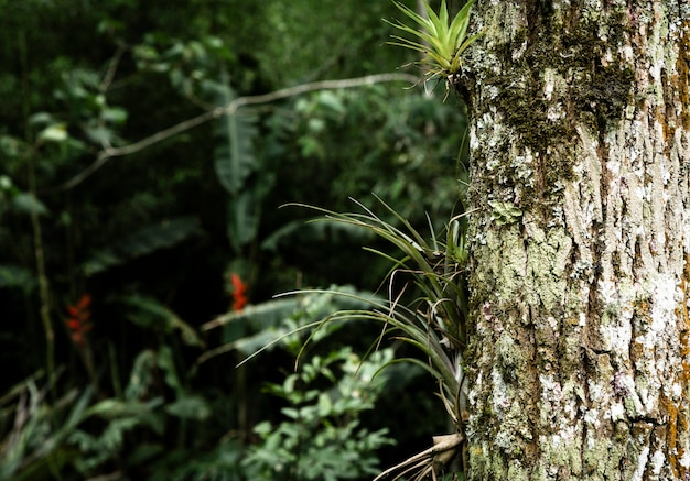 Tronco d'albero con sfondo sfocato vegetazione Foto Gratuite