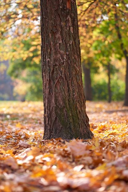 Tronco d'albero nel mezzo di un parco in autunno nel pomeriggio Foto Premium