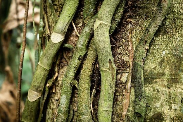 Tronco e viti di albero del primo piano Foto Gratuite