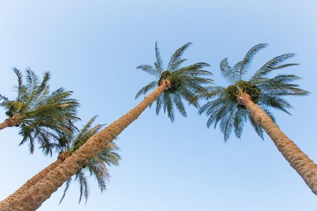Tropici Foto Gratuite