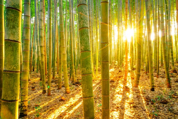 Tubi clima mattina fengshui luminoso Foto Gratuite