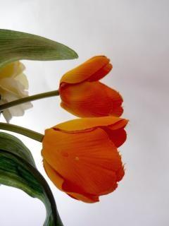 Tulipani arancioni falso yellowflowers scaricare foto for Tulipani arancioni