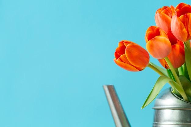 Tulipani arancioni con sfondo blu scaricare foto gratis for Tulipani arancioni