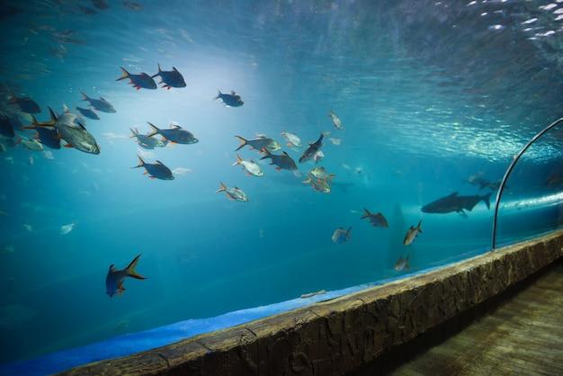 Tunnel di pesci nell'acquario sott'acqua diversi tipi di pesci che nuotano nell'acquario Foto Premium