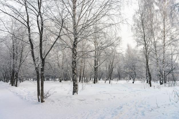 Tunnel di snowy fra i rami di albero nella fine del parco su Foto Premium