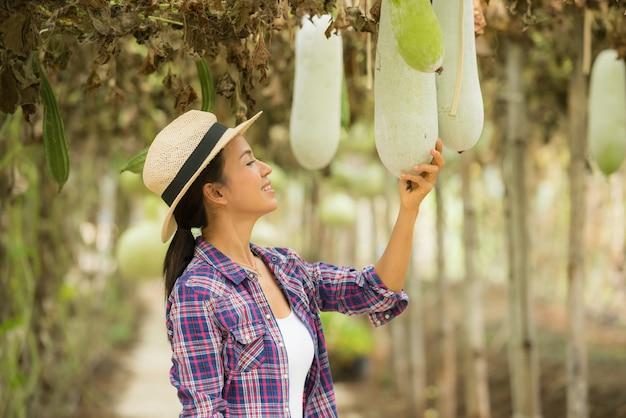 Tunnel winter melon e avere agricoltori per prendersi cura della fattoria Foto Gratuite