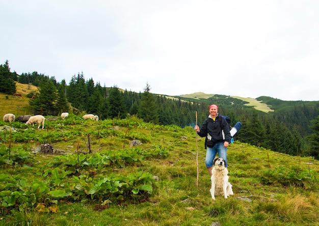 Turista con un cane e agnelli in cima a una montagna Foto Premium