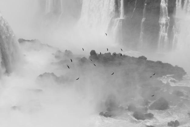 Uccelli che sorvolano le cascate brasiliane di iguazu Foto Premium