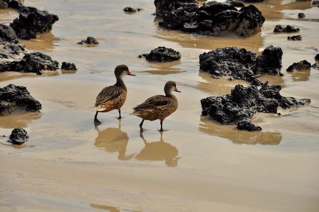 Uccelli sulla spiaggia delle isole galapagos Foto Premium