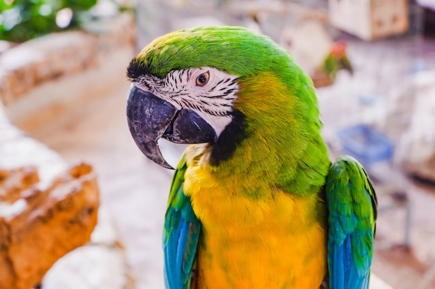 Uccello macaw Foto Premium