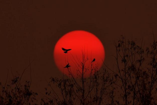 Uccello seduto tra le canne cantando la canzone Foto Premium