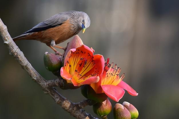 Uccello su un ramo di un albero Foto Premium