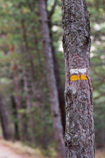 Un albero con il segnale dipinto che segnala il percorso Foto Premium