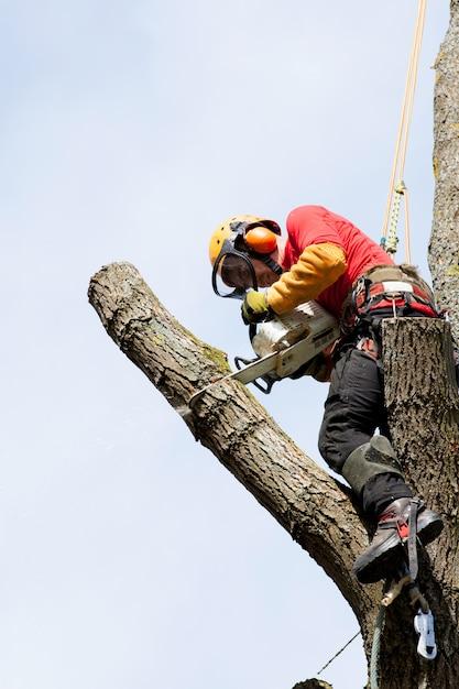 Un arboricoltore che taglia un albero con una motosega Foto Premium