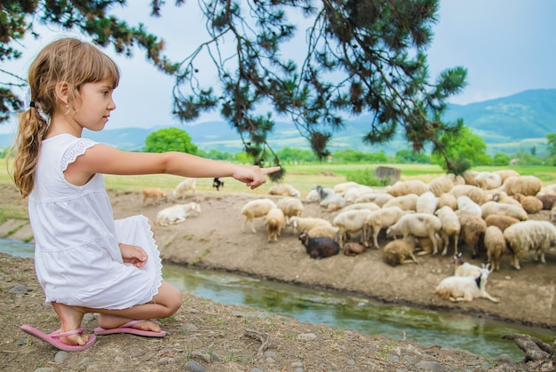 Un bambino guarda un gregge di pecore. viaggia in georgia. Foto Premium