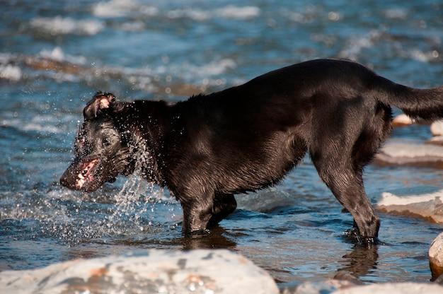 Un cane che gioca in riva al mare Foto Premium
