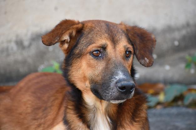 Un cane randagio di strada. il problema degli animali randagi di strada. Foto Premium