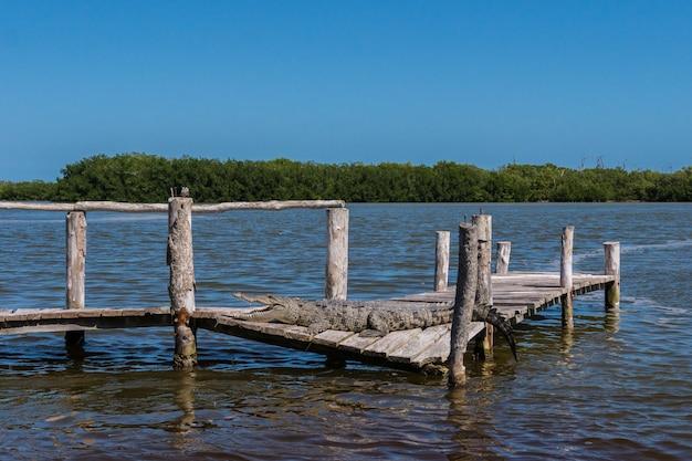 Un coccodrillo nell'acqua con la natura Foto Premium