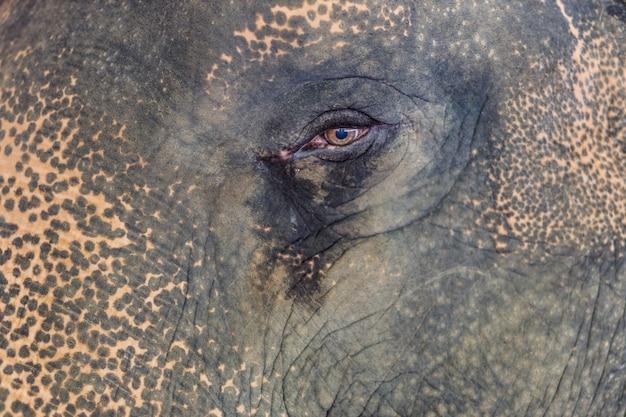 Un elefante tailandese nello zoo, tailandia. Foto Premium