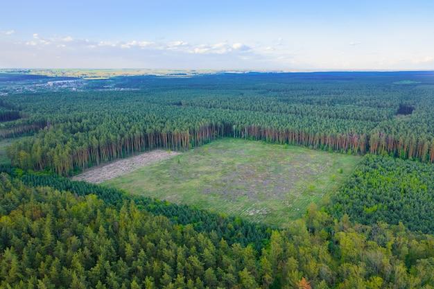 Un'enorme area di deforestazione continua di foreste di conifere verdi. impatto umano sull'ambiente. ripresa aerea. Foto Premium