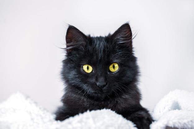 Un gattino nero giace sul divano orizzontale. Foto Premium