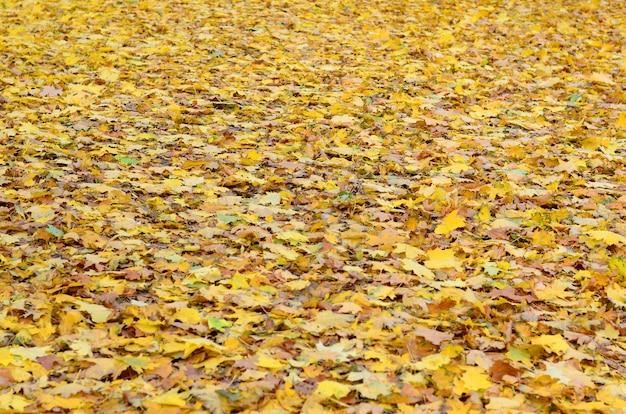 Un gran numero di foglie autunnali cadute e ingiallite sul terreno. trama di sfondo autunnale Foto Premium