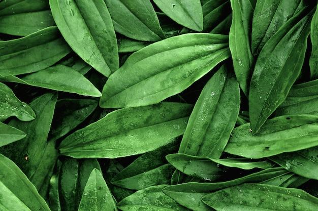 Un layout di foglie verdi Foto Premium