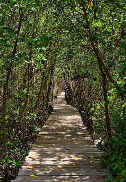 Un lungo sentiero in legno nella foresta di mangrovie Foto Premium