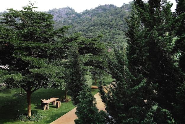 Un parco verde Foto Gratuite