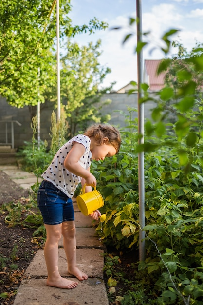 Un piccolo aiutante nel giardino che innaffia i cespugli di lampone con un annaffiatoio giallo al tramonto Foto Premium