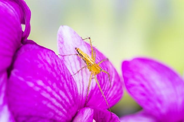 Un piccolo ragno sull'orchidea viola. Foto Premium