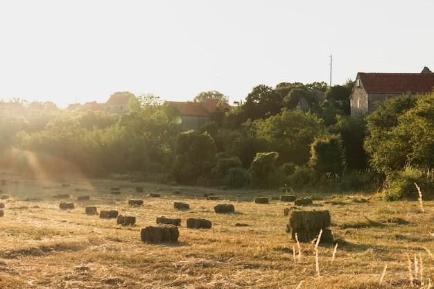 Un sacco di covoni di fieno su una terra in campagna Foto Gratuite