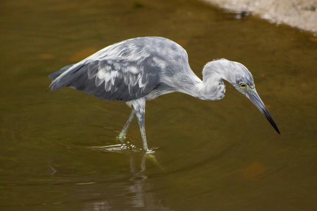 Un uccello nell'acqua Foto Premium