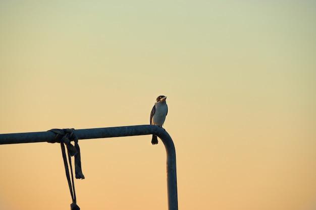 Un uccello sul tubo durante il cielo al crepuscolo. Foto Premium