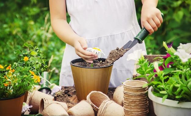 Una bambina sta piantando fiori. il giovane giardiniere. messa a fuoco selettiva Foto Premium