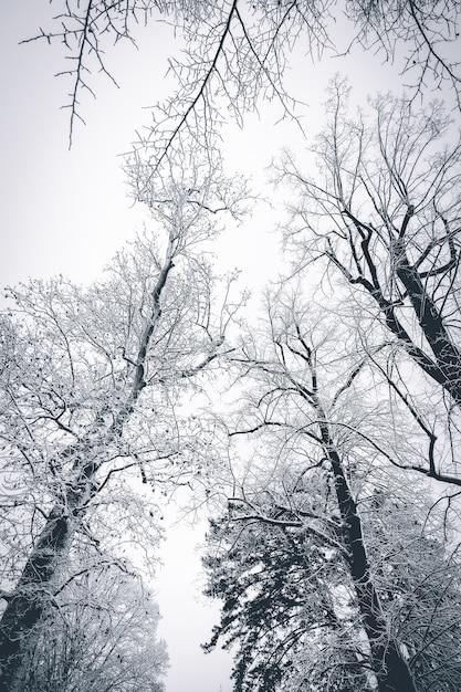 Una bella area innevata in inverno con alberi spogli coperti di neve, creando uno scenario mozzafiato Foto Gratuite