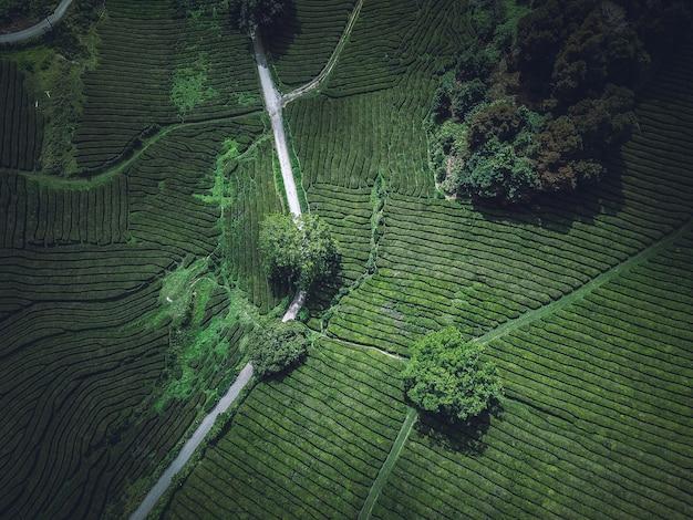 Una bella ripresa aerea aerea di un campo agricolo verde Foto Gratuite