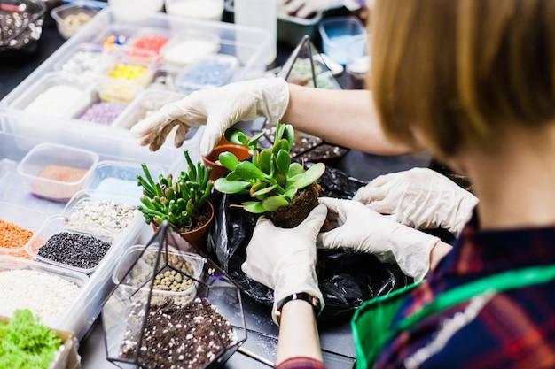 Una master class per piantare cactus e sukkulentov sotto forma di vetro Foto Premium