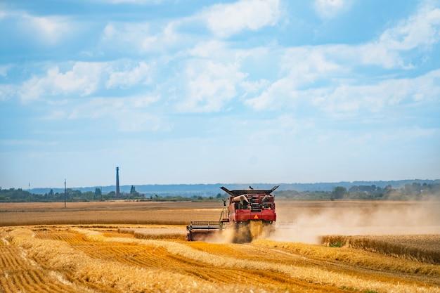 Una mietitrebbia raccoglie un grano saraceno maturo nel mezzo di un campo agricolo. tempo di raccolta. settore agricolo Foto Premium