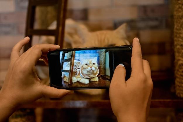 Una persona scatta una foto di un gatto con il suo telefono cellulare. Foto Premium