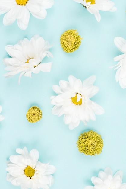 Una vista aerea del fiore bianco e verde su sfondo blu Foto Gratuite