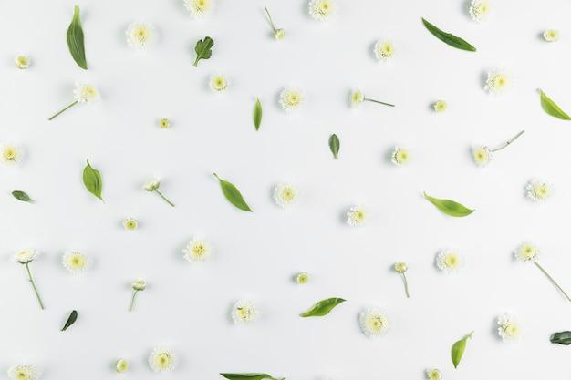 Una vista aerea di crisantemo e foglie si sviluppa su sfondo bianco Foto Gratuite
