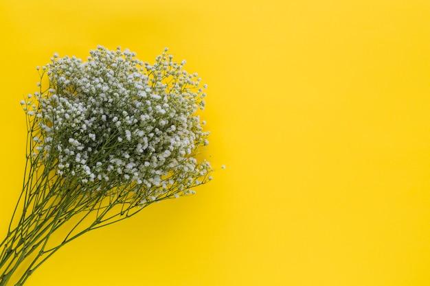 Una vista aerea di fiori baby's-respiro su sfondo giallo Foto Gratuite