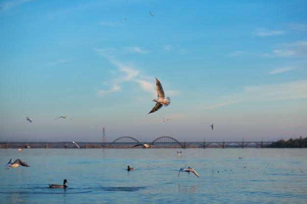Uno stormo di gabbiani sulle rive del fiume della città Foto Premium