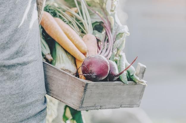 Uomo adulto del coltivatore che tiene le verdure saporite fresche in scatola di legno nel primo mattino del giardino Foto Premium