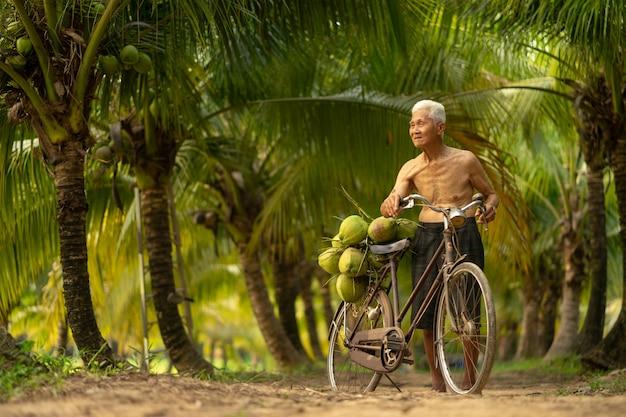 Uomo anziano che raccoglie noce di cocco nell'azienda agricola della noce di cocco in tailandia. Foto Premium