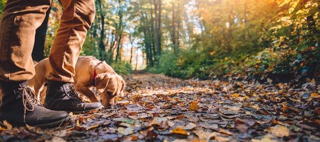 Uomo che fa un'escursione nella foresta di autunno con il cane Foto Premium
