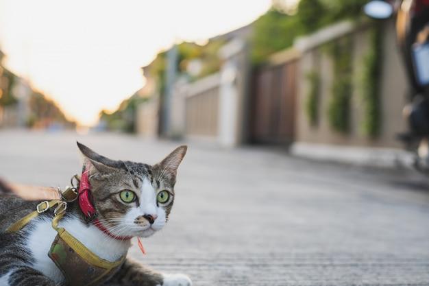 Uomo con guinzaglio per cane e gatto in mano. chiuda sulla mano del fuoco e sul fondo vago per il concetto animale di immagine. Foto Premium