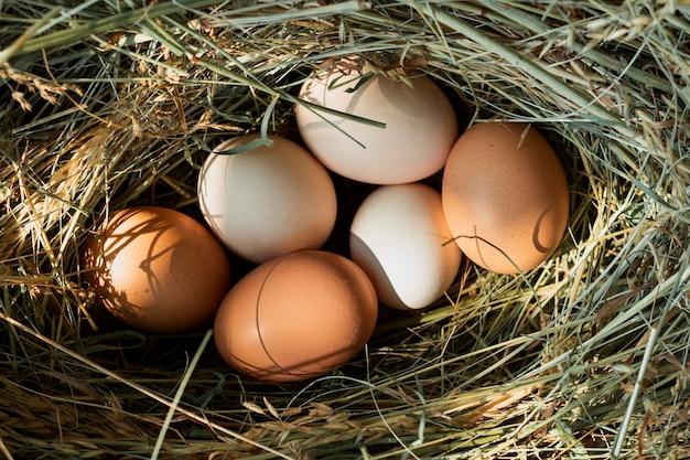 Uova di gallina in un nido di paglia Foto Gratuite